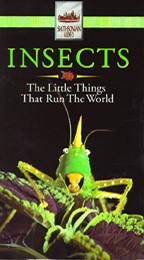 Insects - The Little Things That Run the World